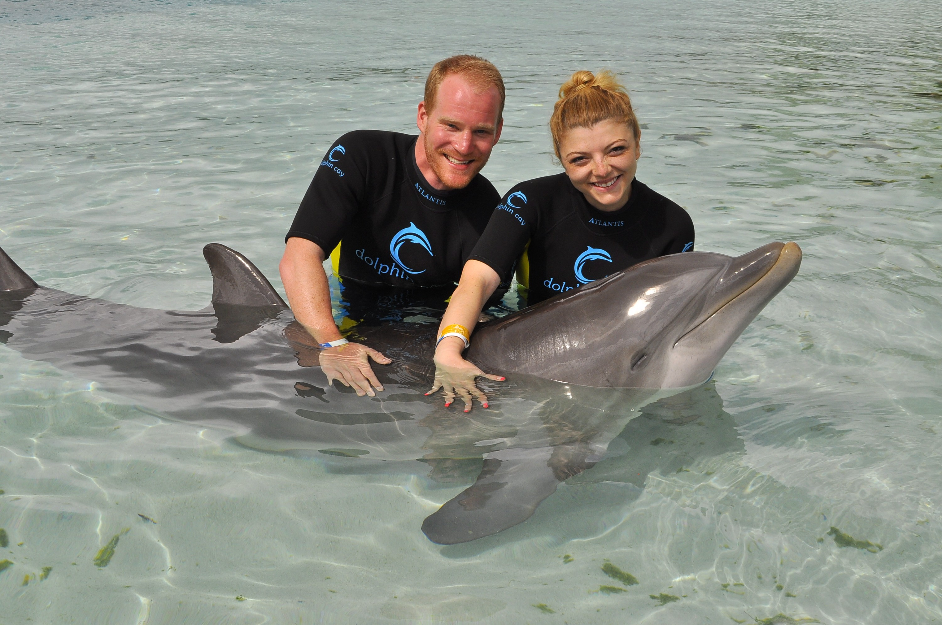 HubSpot Swim with the Dolphins